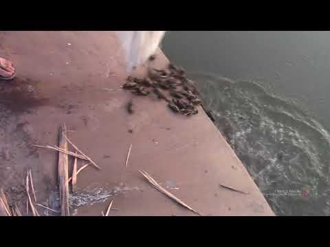 В Волгоградской области задержали браконьера с 230 кг живых раков