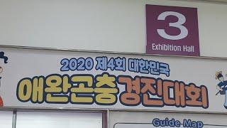 [실시간] 애완곤충경진대회 구경하기!