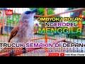 Burung Trucukan Gacor Istimewa Pas Untuk Masteran Trucukan Ombyokan Hobi Kicau Chanel  Mp3 - Mp4 Download