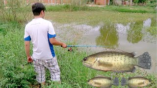 Fishing for Climbing Perch in Cambodia - Pond at Phnom Penh Thmey