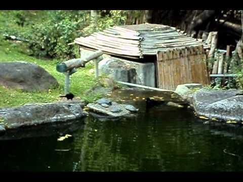 Jard n japon s bosque colomos youtube for Jardin japones
