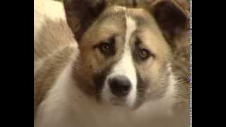 В уфимском приюте «Доброта» живут собаки-доктора