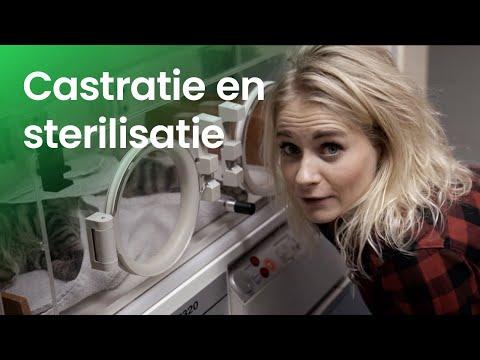 Wat gebeurt er bij het castreren en steriliseren van dieren?