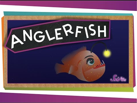 All About Anglerfish