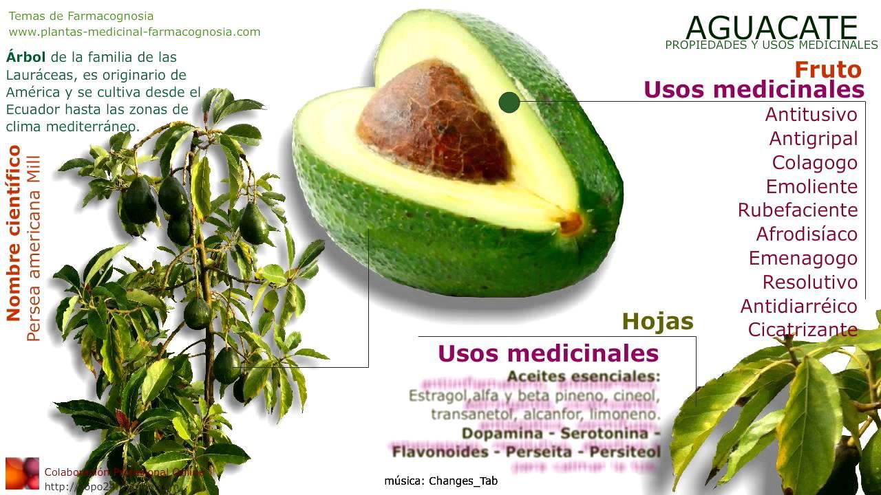propiedades del aguacate para la salud