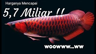 10 Jenis Ikan Arwana Tercantik dan Termahal di Dunia | Top 10 arowana Fish