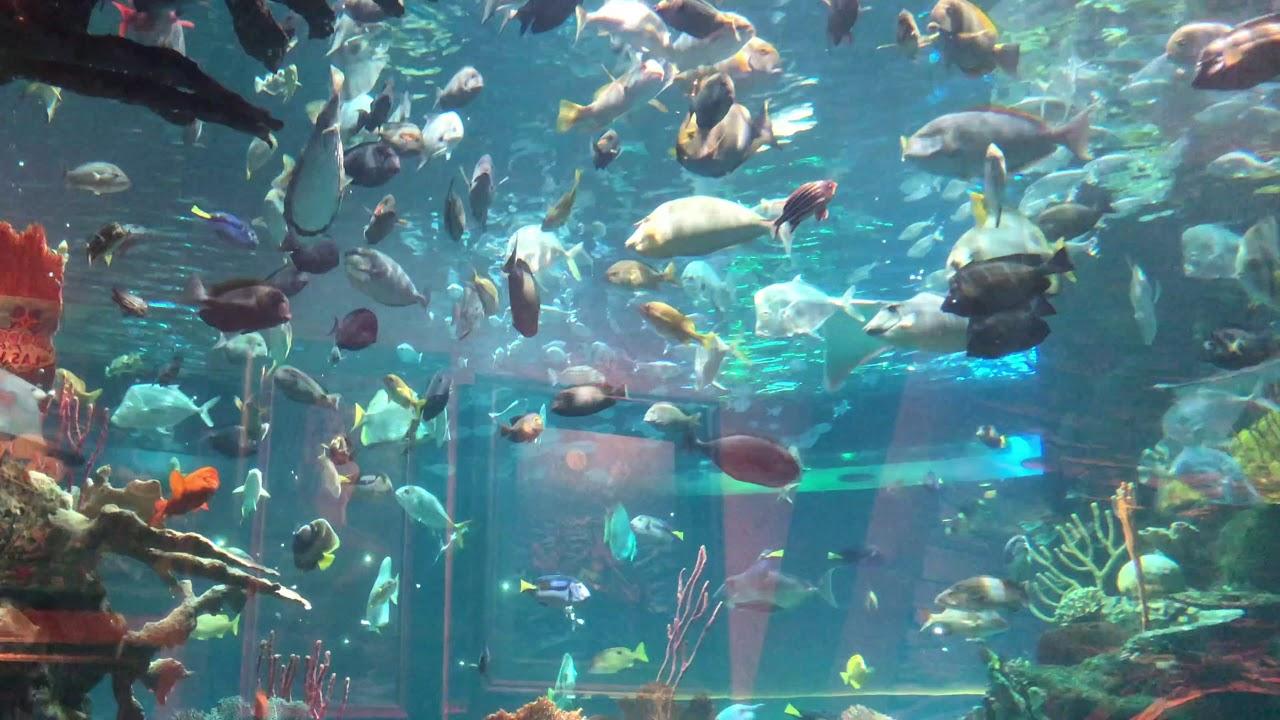 The Aquarium Silverton Hotel Casino Las Vegas Youtube