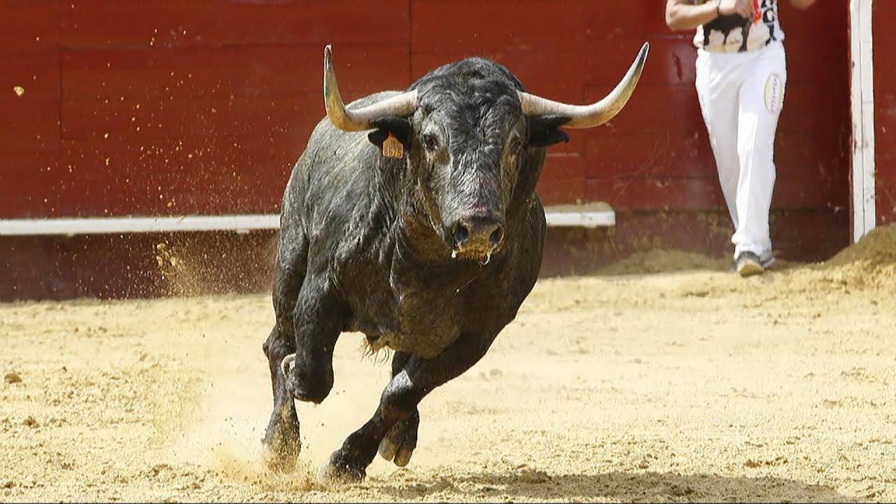 E Toro