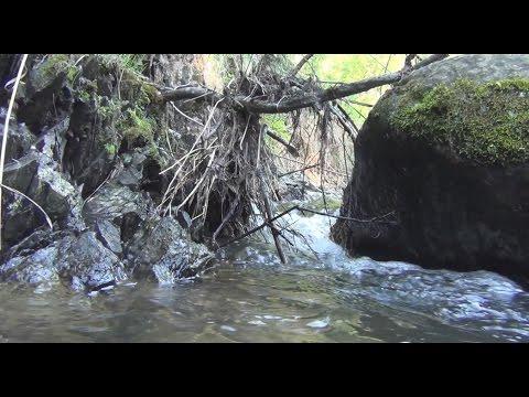 Платные водоемы Новосибирской области. Сайт Новосибирских