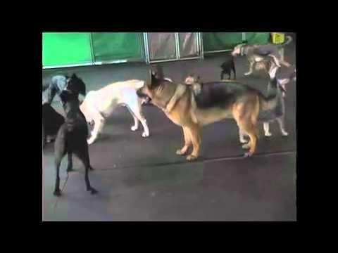 Alpha Dog Video