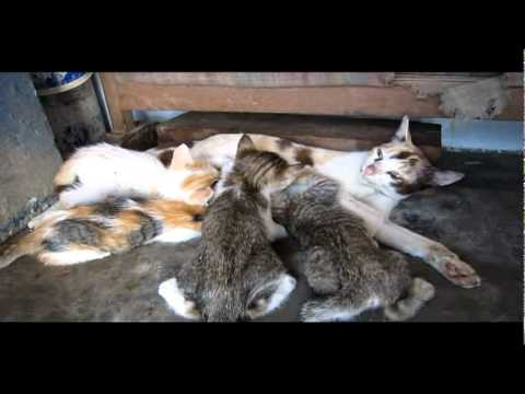 Ternak Kucing Funnycat Tv