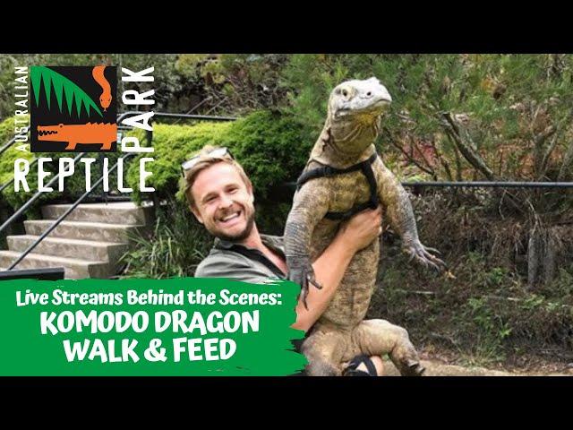 LIVE: KOMODO DRAGON WALK & FEED   AUSTRALIAN REPTILE PARK