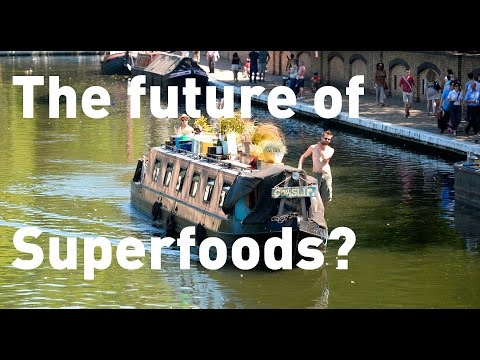 Forget Kale, Duckweed from London's canals could be the new superfood
