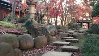 東京賞楓:代官山旧朝倉邸 Autumn in Tokyo: Old Asakura House in Daikanyama thumbnail