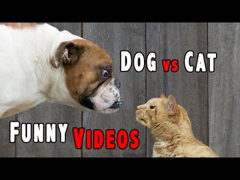 The Best Pranks And Failures: Dog vs Cat Funny Videos