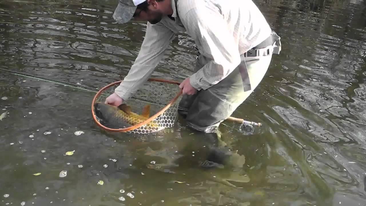 Fly Fishing for Carp Urban South Platte River Denver ...