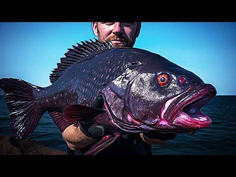 Вопрос: Может ли рыба видеть в темноте?