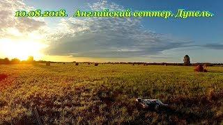 Красивая охота с легавой. 10.08.2018. Дупель.