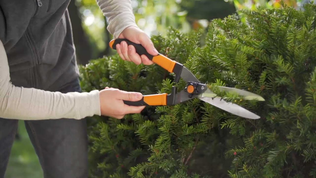 Hedge Trimming Shears Garden Design Ideas