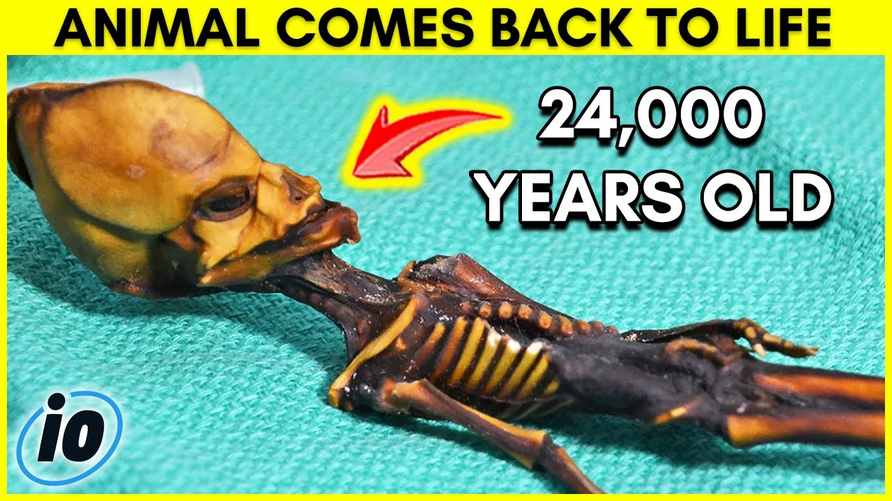 24,000 Year Old Animal Comes Back To Life