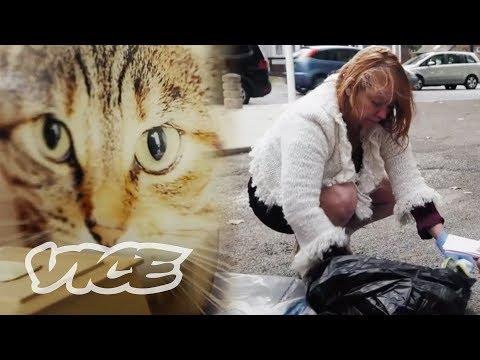 Hunting a Serial Cat Murderer