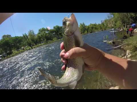 Kern River Trout Fishing 2017
