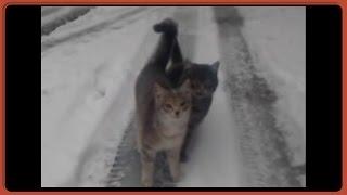 Красивые бездомные кошки зимой