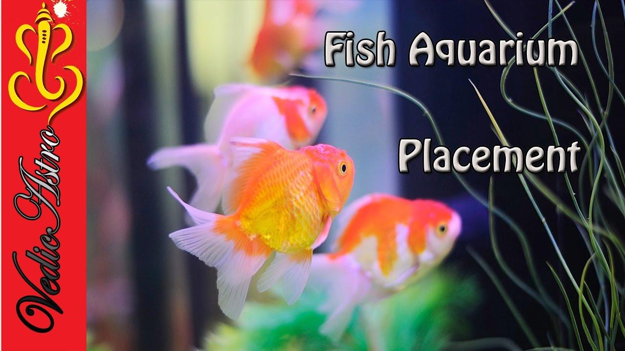 Vastu Tips Fish Aquarium म स बत स बच त ह