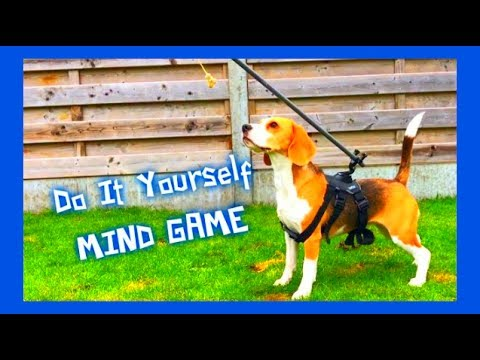 Do It Yourself : Building a DOG MIND GAME