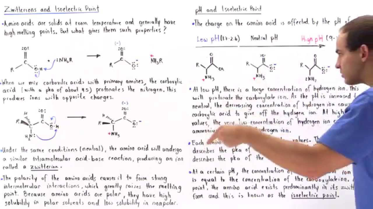 Zwitterion Form Of Amino Acids Youtube