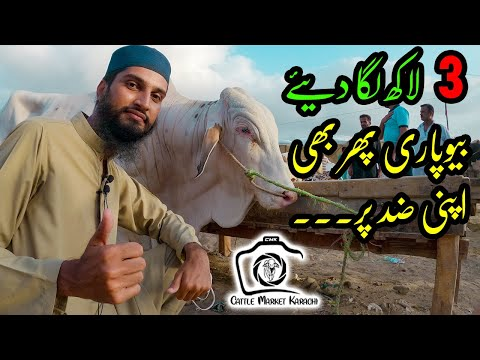 130K to 800K Cattle Prices   SODAY Ki Koshish   Sohrab Goth Cow Mandi 2021   Bakra Eid 2021 Qurbani