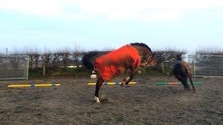 Horse Vs Rug