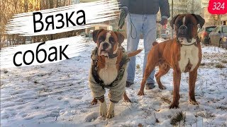 Вязка собак БОКСЁРОВ.Mating boxer dogs