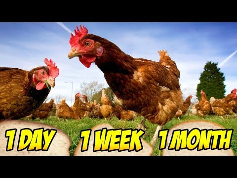 CHICKEN CHOOSES HOW LONG TO BAN MINECRAFT HACKERS