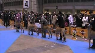 2011年 12月 18日 (日曜日) 東京ビッグサイト 【ドッグショー】FCI東...