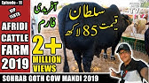 COW MANDI SOHRAB GOTH 2019 KARACHIAFRIDI Cattle FarmVIP TENTSEpisode – 11in URDU HINDI