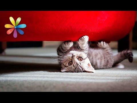 Как отучить кошку точить когти об диван