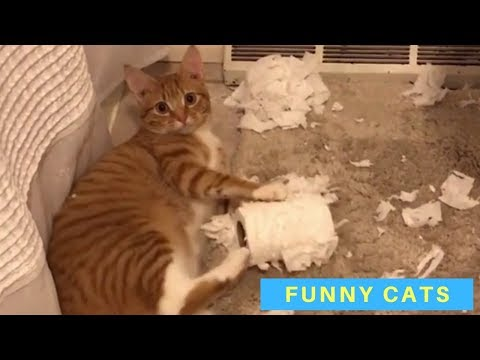 Cute and Funny Cat Videos – Cats Being Cats