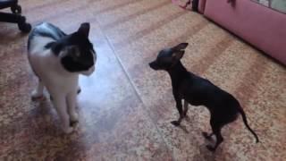 Собака дала отпор коту