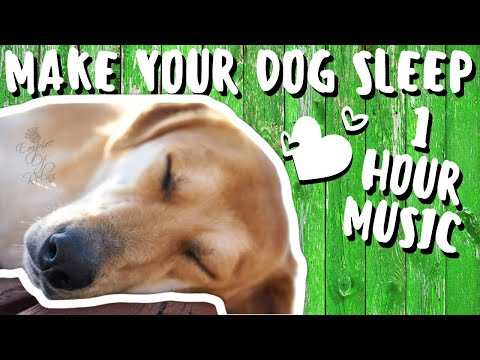 1-hour-music-for-dogs-to-go-to-sleep-|-music-for-dogs-[guaranteed]