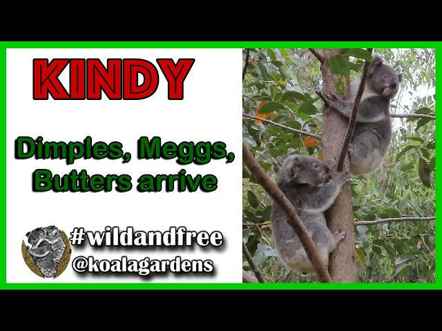 Kindy - Dimples, Meggs and Butters arrive!