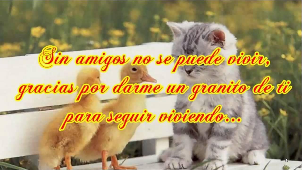 Frases Bonitas De Amistad Feliz Dia Del Amor Y La Amistad Youtube