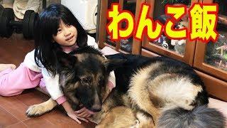 grandchild and #GermanShepherd#ドックフード#シェパード犬 大型犬ジャ...