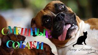 Самые смешные собаки 1 Видео собак Funny dogs compilation Part 1 Funny Animals
