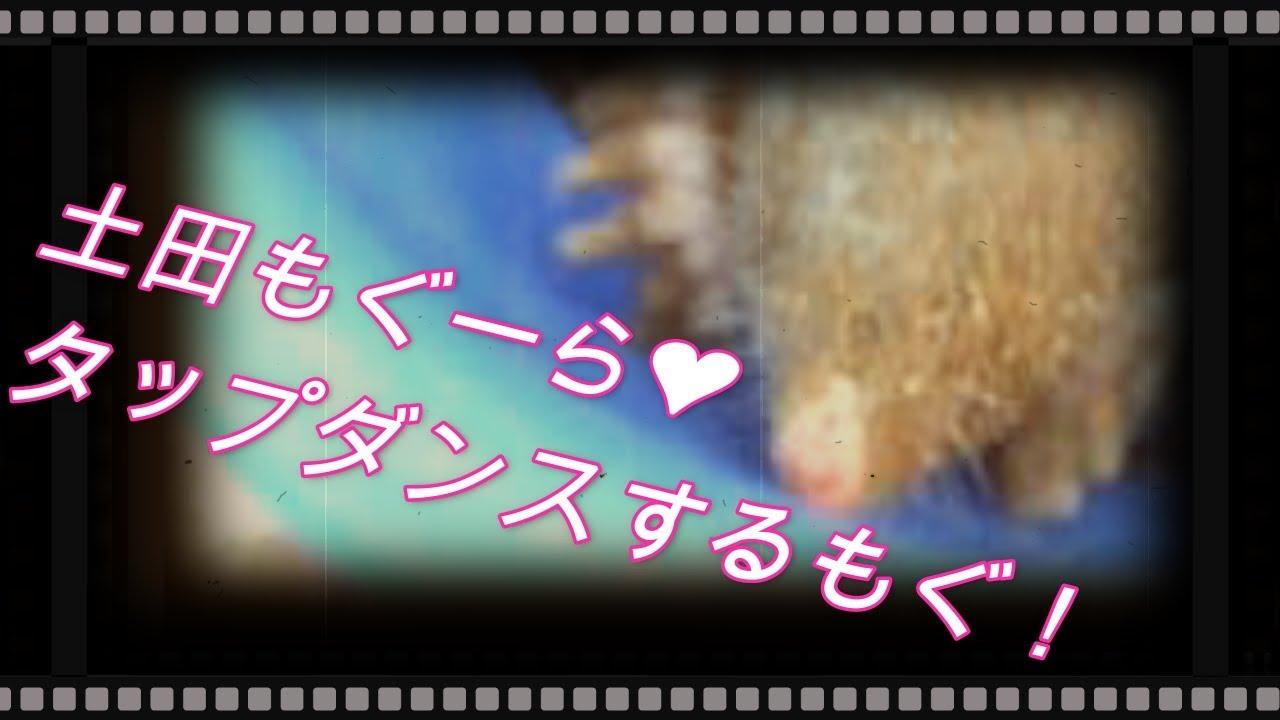 【リアルMinecraft】タップダンスやるもぐ!【ホルライブ/土田もぐら】
