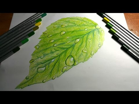 Yaprak Ve Su Damlası Çizimi / Drawing Water Drop On Leaf