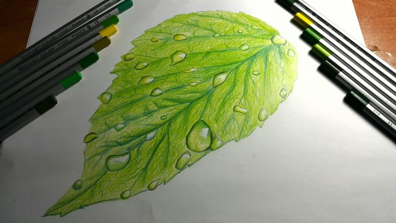 Yaprak Ve Su Damlasi Cizimi Drawing Water Drop On Leaf Youtube