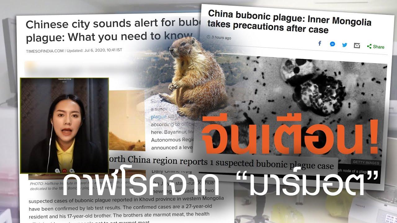 จีนเตือน! กาฬโรคครั้งใหม่จากสัตว์ฟันแทะ by TrueVroom | TNN ข่าวเย็น | 06-07-20
