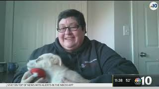 Putting The Focus On Pet Adoption On National Puppy Day | NBC10 Philadelphia