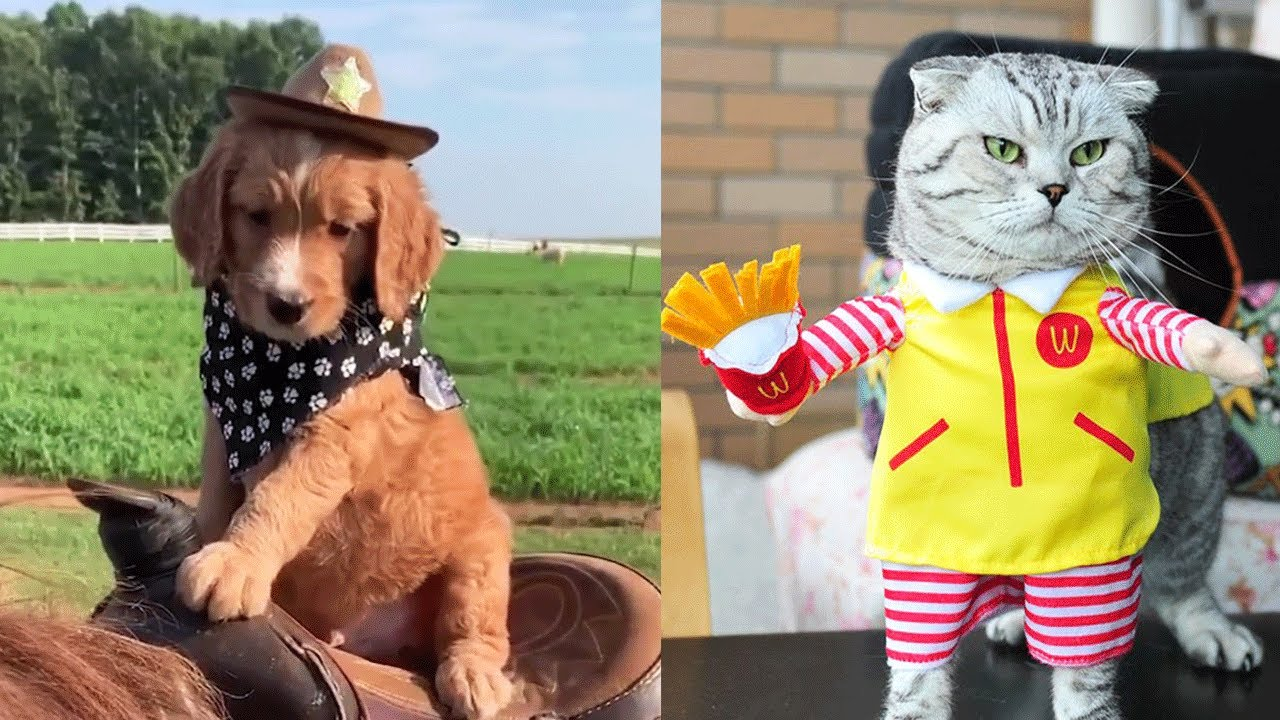 TRY NOT TO LAUGH - Cute Pets and Funny Animal Videos!